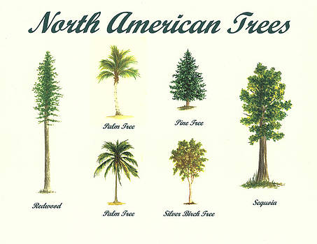 North American Trees by Michael Vigliotti