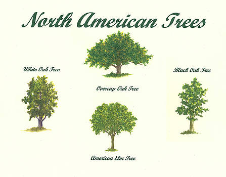 North American Trees Number 2 by Michael Vigliotti