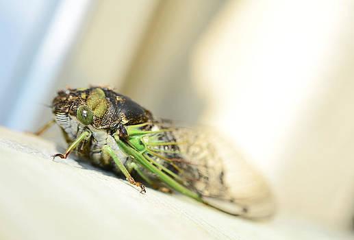 Not A Cute Bug by Lori Tambakis