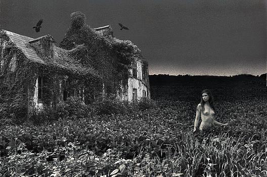 A shallow pond by Brian Quinn