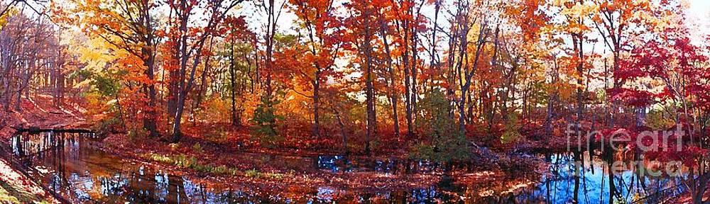 November Foliage  by Rita Brown