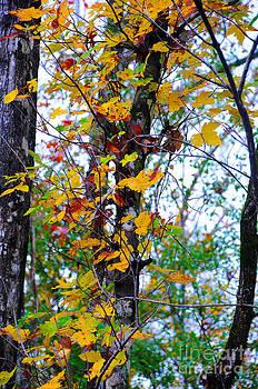 November Leaves by Leon Hollins III