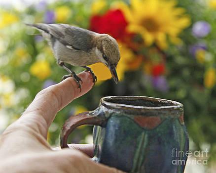 Nuthatch Bird on Finger Photo by Luana K Perez