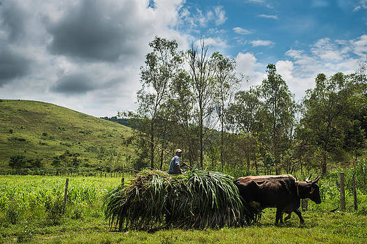 Bullock cart - Valenca - Brazil by Igor Alecsander