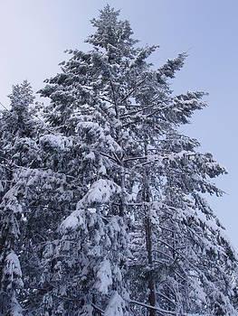 Marilyn Wilson - O Christmas Tree