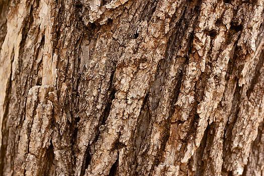 Oak Bark by Brady Lane