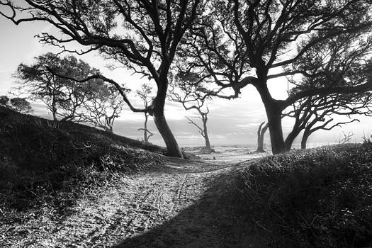 Debra and Dave Vanderlaan - Oak Grove in Black and White