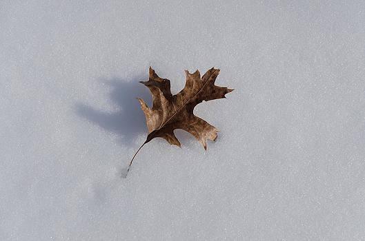 Oak Leaf by Diana Boyd