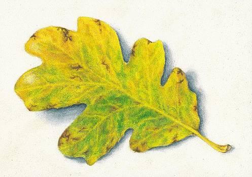 Oak Leaf by Rebecca Prough