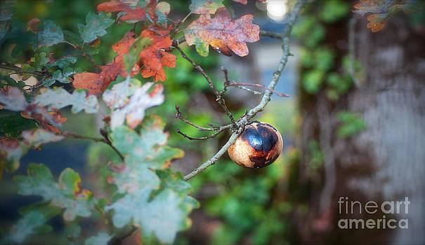 Gwyn Newcombe - Oak Pod