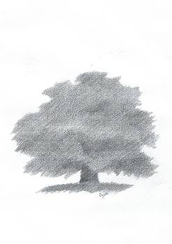 Oak Tree Drawing Number Five by Alan Daysh