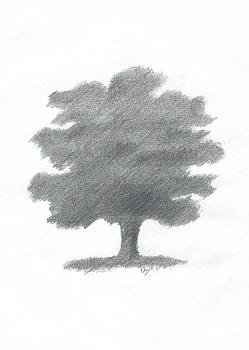 Oak Tree Drawing Number Seven by Alan Daysh