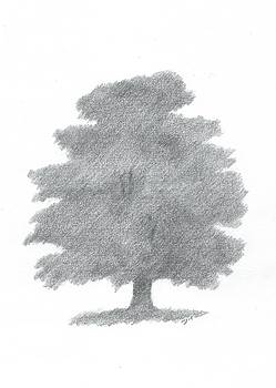 Oak Tree Drawing Number Six by Alan Daysh