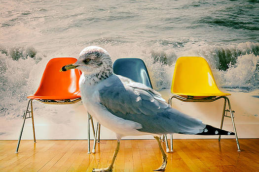 Ocean behind plastic chairs with bird walking by James Bethanis