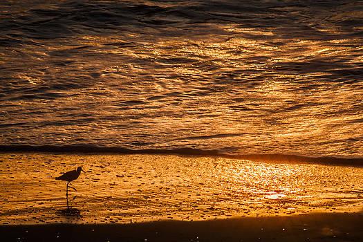 Ocean Bird by Roxanna Coeling