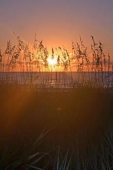 Ocean Lakes Myrtle Beach Sunrise 2 by Making Memories Photography LLC
