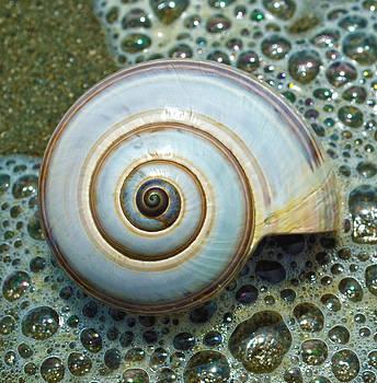 Ocean Shell Spiral White by Sandi OReilly