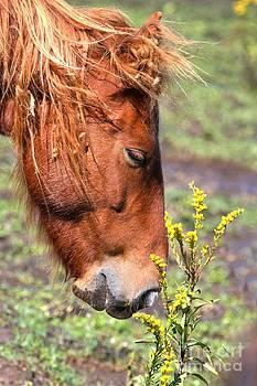 Adam Jewell - Ocracoke Wild Pony