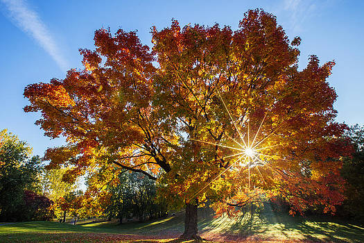 October Maple  by Mircea Costina Photography