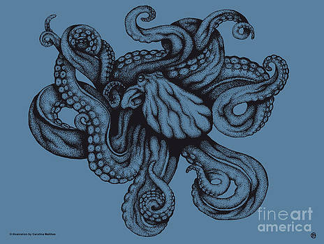 Octopus by Carolina Matthes