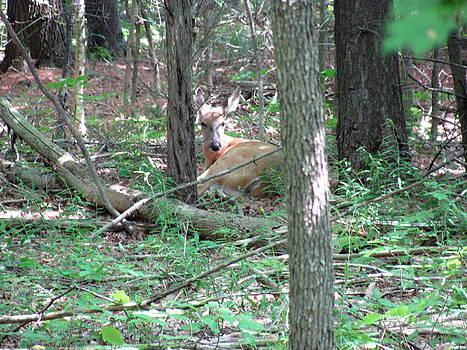 Oh Deer by Carolyn Mortensen