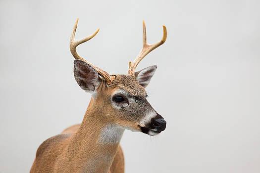 Oh Deer by Hali Sowle