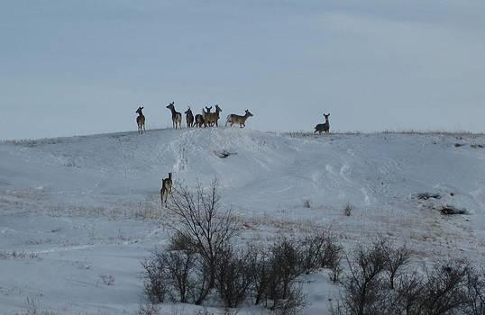 Oh Deer by Linda Koch