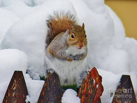 Judy Via-Wolff - Oh No   Early Snow