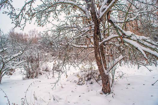 Jenny Rainbow - Old Apple Tree in Winter Garden