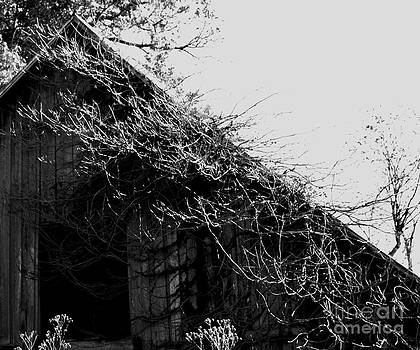 Old Black And White Barn by Linda Cox