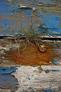 Liz  Alderdice - Old Boat - Peeling Paint