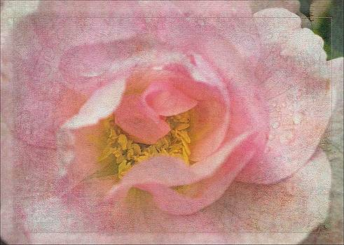 Liz  Alderdice - Old English Rose