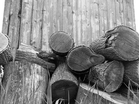 Old Firewood by Mark Kime