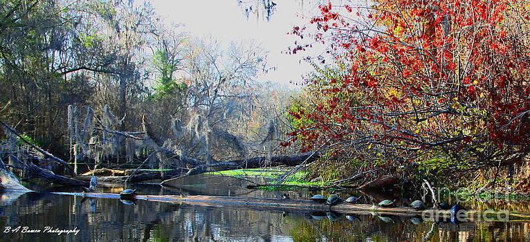 Barbara Bowen - Old Florida along the Sante Fe River