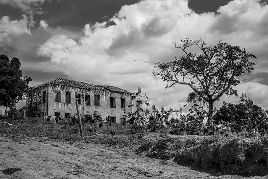 Old House And Cows - BW by Fabio Giannini