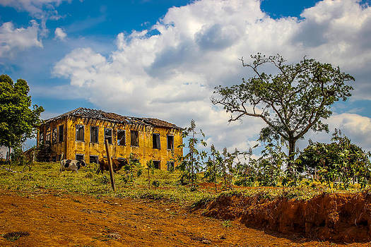 Old House And Cows by Fabio Giannini