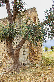 Patricia Hofmeester - Old monastery in Crete with olive tree
