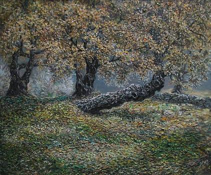 Old mulberry in Drenova by Lazar Taci