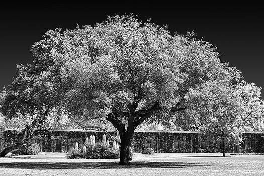 Christine Till - Old Oak Tree Mission San Jose