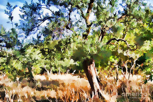 Barbara McMahon - Old Olive Tree