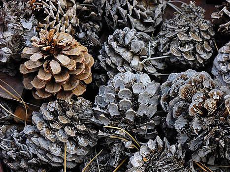 Kae Cheatham - Old Pinecones