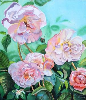Old Roses by Stephanie Zobrist