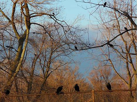 Gothicolors Donna Snyder - Old Rusted Fence