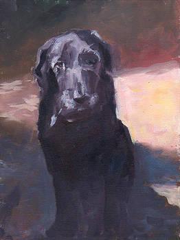 Old Soul by Sheila Wedegis