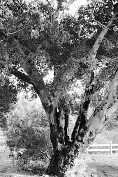 Gilbert Artiaga - Old Tree