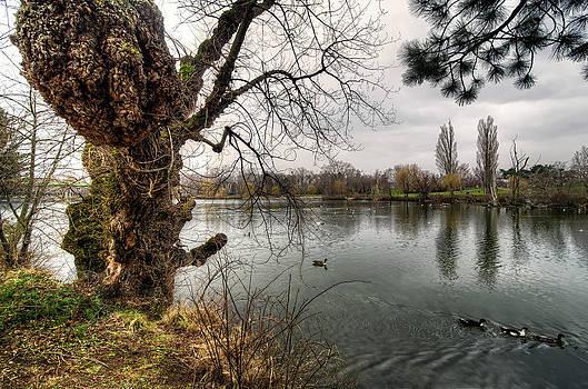 Old tree by Oleksandr Maistrenko