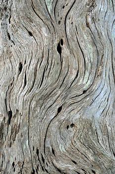 Old Tree Trunk on Jekyll Island by Bruce Gourley