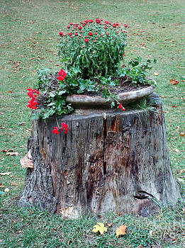 Old Tree Trunk with Flowers by Ioana Ciurariu