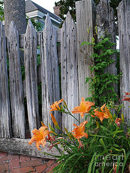 Old Wood Fence and Lilies by Jeanne  Woods