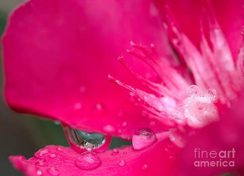Oleander by Jared Shomo